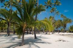Palme sulla spiaggia Immagini Stock