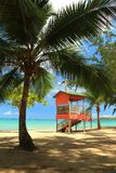 Palme sulla spiaggia Immagine Stock