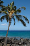 Palme sulla spiaggia Fotografie Stock