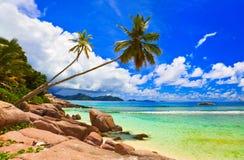 Palme sulla spiaggia alla La Digue, Seychelles dell'isola Immagini Stock Libere da Diritti
