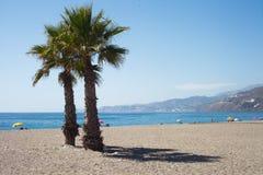 Palme sulla spiaggia con le montagne dietro Fotografia Stock Libera da Diritti