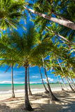 Palme sulla spiaggia della baia della palma in Australia Fotografia Stock