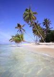 Palme sulla spiaggia esotica Immagini Stock