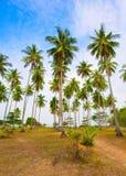 Palme sulla spiaggia sotto il cielo blu fotografie stock libere da diritti