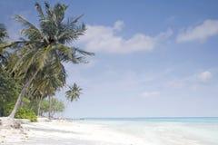 Palme sulla spiaggia tropicale Immagini Stock Libere da Diritti