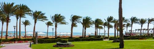 Palme sulla spiaggia in un giorno soleggiato luminoso Fotografia Stock