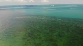 Palme sulla spiaggia vicino al mare blu Vista del fuco dei cocchi tropicali che crescono sulla riva sabbiosa del mare blu pulito  video d archivio
