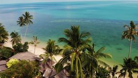 Palme sulla spiaggia vicino al mare blu Vista del fuco dei cocchi tropicali che crescono sulla riva sabbiosa del mare blu pulito  stock footage
