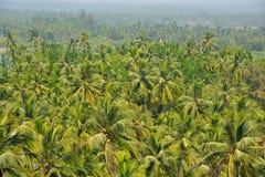 Palme tropicali Immagini Stock