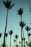 Palme tropicali Immagini Stock Libere da Diritti