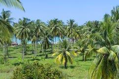 Palme tropicali con il fondo del mare e della spiaggia Fotografia Stock