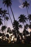 Palme tropicali di tramonto della spiaggia di paradiso Fotografia Stock