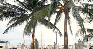 Palme tropicali sulla spiaggia video d archivio
