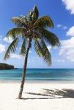 Palme am tropischen Strand Lizenzfreie Stockfotos