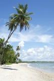 Palme-tropischer brasilianischer Strand Lizenzfreies Stockbild