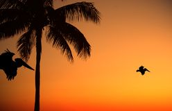 Palme u. Vogel-Sonnenuntergang stockfoto