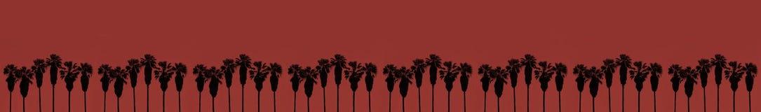 Palme in una fila con alto rosso dei tronchi fotografie stock libere da diritti