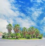 Palme in una rotonda sotto un cielo nuvoloso fotografia stock libera da diritti