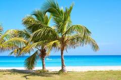 Palme in una spiaggia sabbiosa Immagini Stock Libere da Diritti