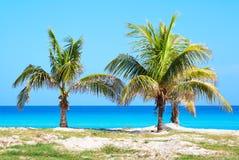Palme in una spiaggia sabbiosa Immagini Stock