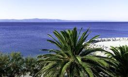 Palme und adriatisches meeres- Podgora, Makarska Riviera, Dalmatien, Kroatien Lizenzfreies Stockbild