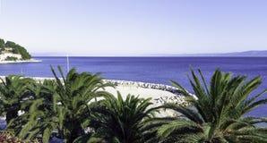 Palme und adriatisches meeres- Podgora, Makarska Riviera, Dalmatien, Kroatien Lizenzfreie Stockfotos