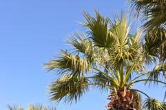Palme und blauer Himmel Stockbilder