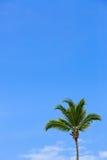 Palme und blauer Himmel Lizenzfreie Stockfotografie