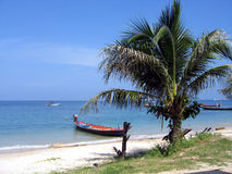 Palme und Boot auf einem Strand Stockfotografie