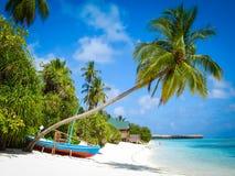 Palme und Boot in Malediven lizenzfreies stockbild