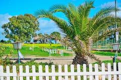 Palme und Bretterzaun durch das Meer in Sardinien Stockfoto