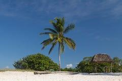 Palme und das Haus von Schilfen auf dem Strand Lizenzfreie Stockfotografie
