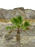 Palme und Felsen Stockbild