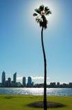 Palme und Fluss cityline mit Wolkenkratzer Stockbild