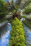 Palme und heller Sonnenschein auf blauem Himmel Stockbilder