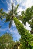 Palme und heller Sonnenschein auf blauem Himmel Lizenzfreies Stockfoto