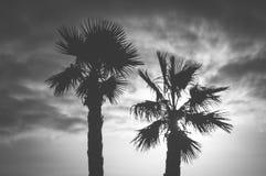 Palme und Himmel stockfoto