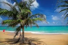 Palme und rote Fahne auf dem Meer setzen auf den Strand Stockbilder