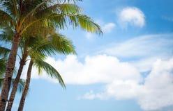 Palme und schöner Himmel Lizenzfreie Stockfotografie
