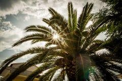 Palme und sternenklare Sonne Stockbilder