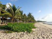 Palme und Strand 3 Lizenzfreie Stockfotografie