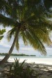 Palme und tropischer Strand Stockfoto