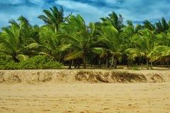 Palme und tropischer Strand Lizenzfreie Stockfotos