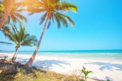 Palme und tropischer Strand stockfotografie