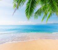 Palme und tropischer Strand stockbilder