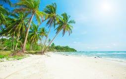 Palme und tropischer Strand stockbild