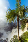 Palme und Wasserfall Stockbild