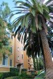 Palme und Wohnungen Stockfotos