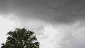 Palme und Wolken timelapse stock video