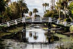 Palme unter der Brücke Lizenzfreies Stockbild